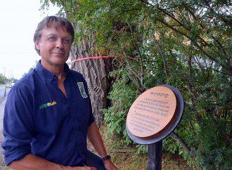 L'imposant peuplier Woody – Une fin de vie honorable pour ce centenaire de la nature Drummondvillois