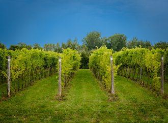 Une médaille d'or et deux médailles de bronze pour les vins biologiques du Vignoble Domaine des 3 fûts
