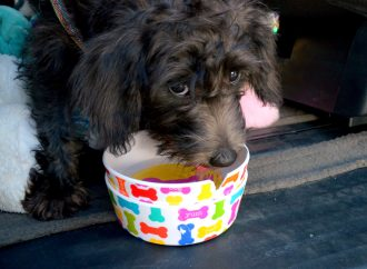 Un chien laissé sans surveillance dans une voiture-Le propriétaire mis a l'amende