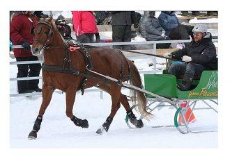 Fête d'hiver et derby d'attelage à Sainte-Clotilde-de-Horton le 9 février