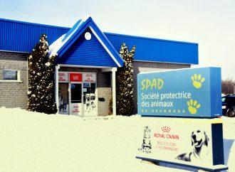 Une annonce qui a du chien pour la Société protectrice des animaux de Drummond (SPAD)