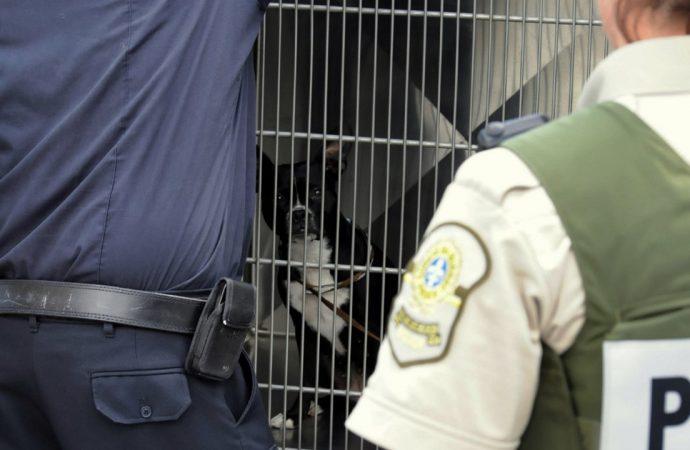 Policier mordu par un chien