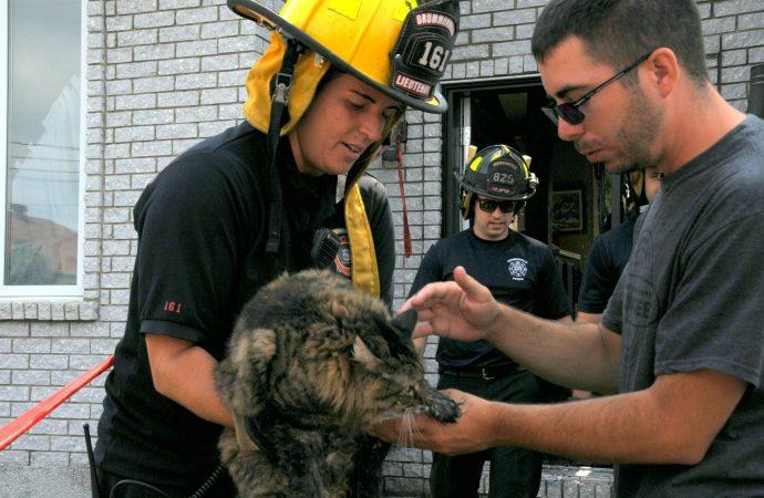 Incendie rue Lalemant, la chatte Lily sauvée par les pompiers