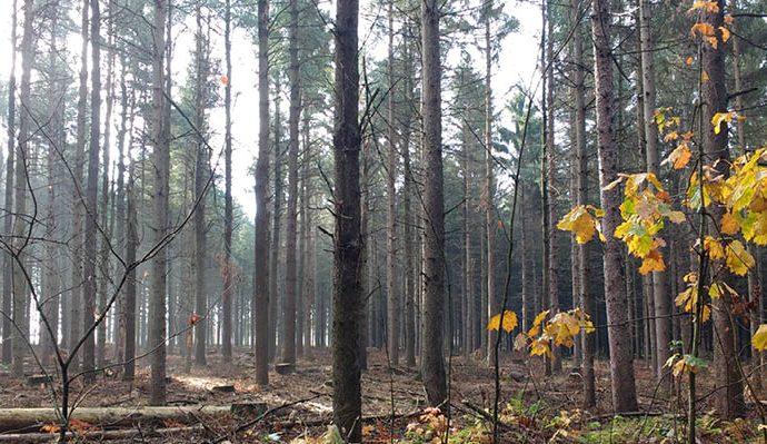 Des travaux d'aménagement forestier dans la Forêt Drummond entrepris par la Ville