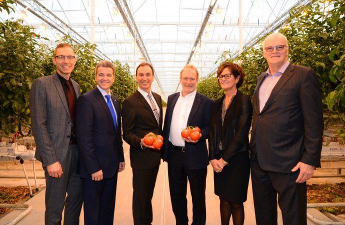 DEMERS inaugure une serre de tomates dernier cri: Des produits à faible empreinte écologique