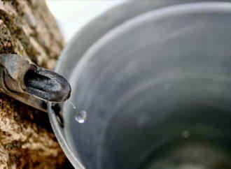 Une récolte exceptionnelle de 175 millions de livres de sirop d'érable en dépit de la pandémie