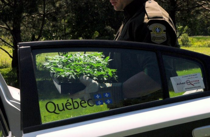 Poursuite de la lutte contre la production illégale de cannabis