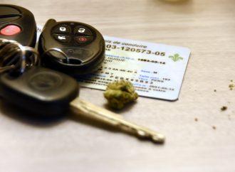 Les jeunes font des choix dangereux en ce qui concerne le cannabis au volant