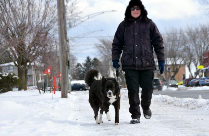 Un meilleur encadrement des chiens pour la sécurité du public