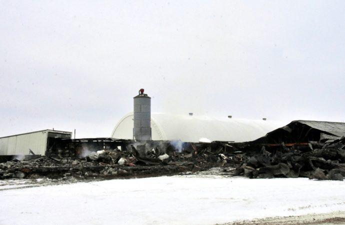 Une porcherie endommagée par un incendie à Wickham