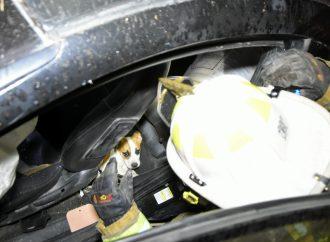 Un conducteur et un jeune chiot sauvés d'une violente embardée près de Drummondville