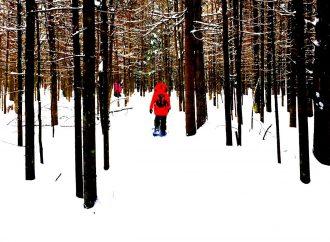 Une vision pour le développement du Parc régional de la Forêt Drummond