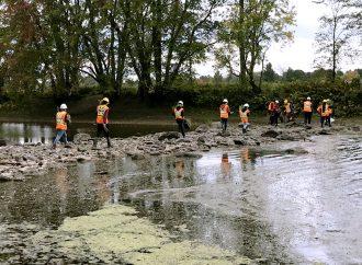 Opération de végétalisation de rives pour préserver deux îlots du Parc régional de la Forêt Drummond