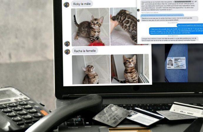Chats et chiens à donner, des milliers de dollars arnaqués à Drummondville par un réseau de fraudeurs