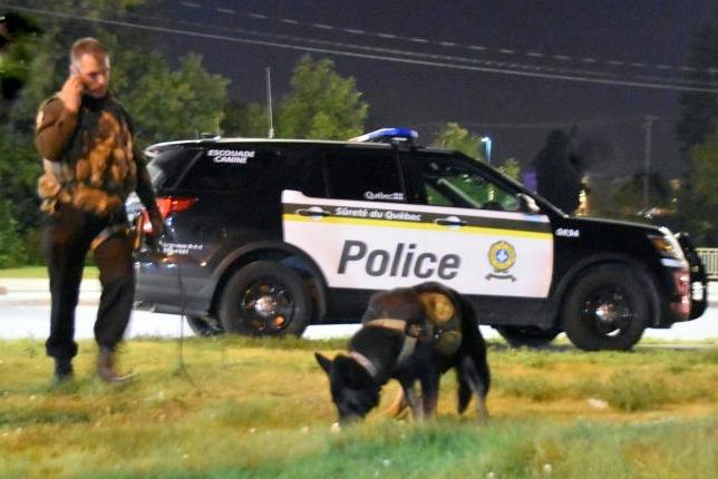 Un septuagénaire perdu en forêt retrouvé grâce au Maître chien de la SQ affecté à la MRC de Drummond