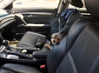 Chien laissé dans une voiture au soleil – Une conductrice se voit remettre un constat d'infraction à Drummondville