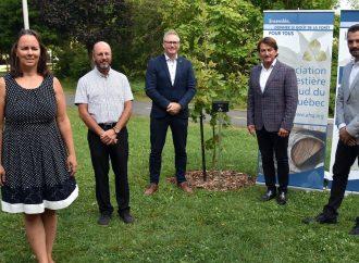 Drummondville accueille un arbre en l'honneur des 75 ans de l'Association forestière du sud du Québec